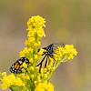 DSC_0370 monarch_DxO