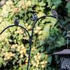 DSC_5787 backyard bird feeder
