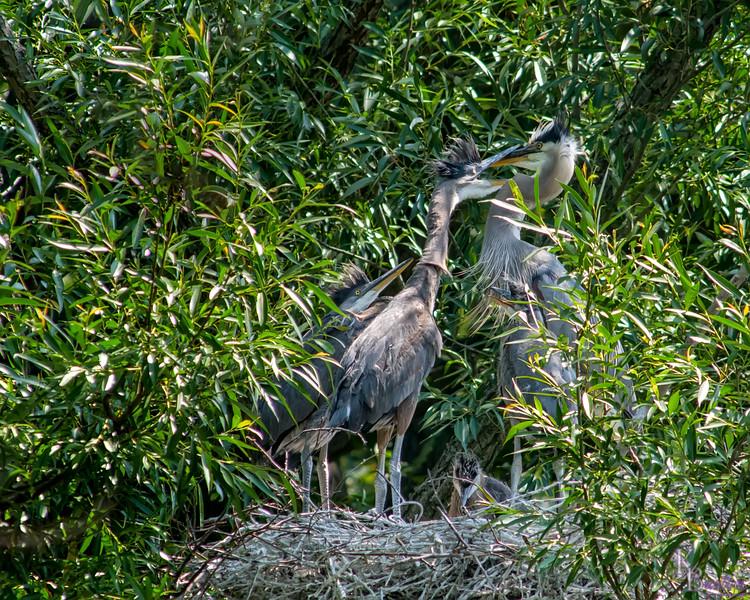 DSC_8916 heron's nest