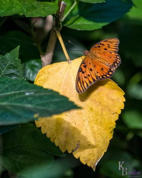 DSC_7408 scenes from Butterfly Gardens
