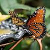 DSC_3029 scenes from butterfly gardens