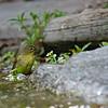 DSC_1284 bird bath