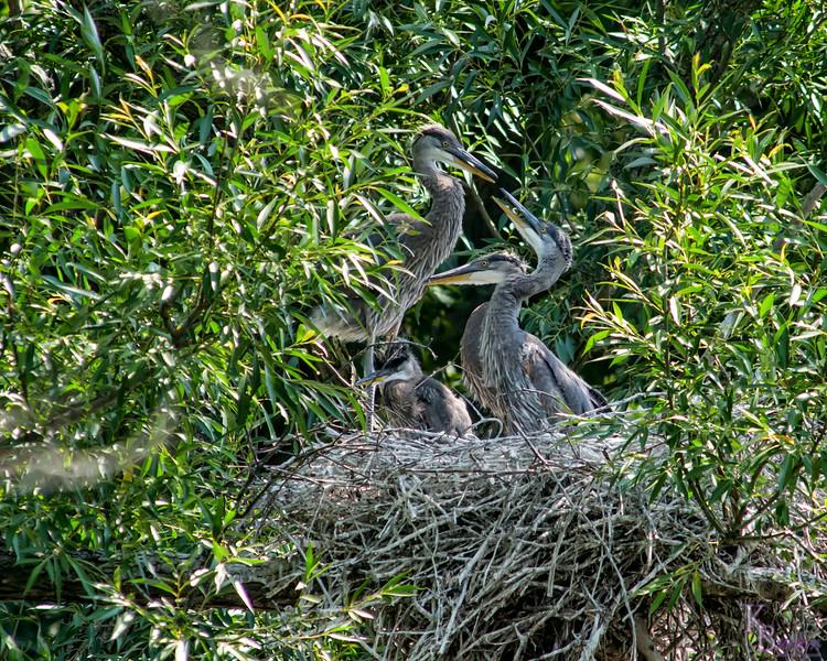 DSC_8805 heron's nest