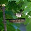 DSC_5270 backyard visitors_DxO