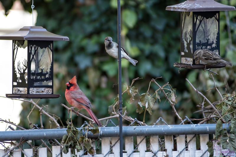 DSC_8990 backyard bird feeders