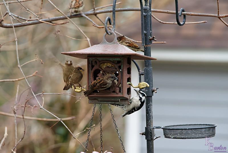 DSC_2395 backyard visitors_DxO