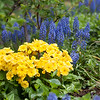 DSC_4281 spring flowers