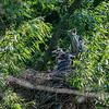 DSC_6851 heron's nest