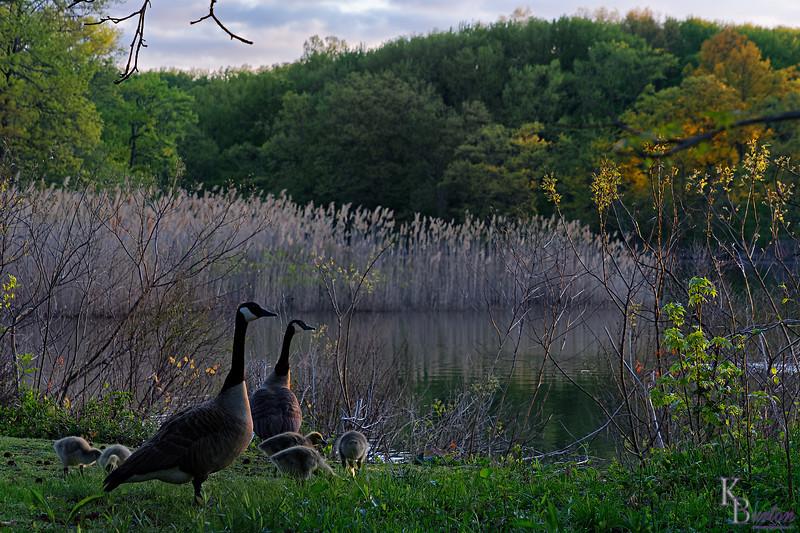 DSC_1633 daybreak at Wolfe's pond
