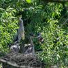 DSC_6955 heron's nest