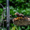 DSC_4325 backyard bird feeder