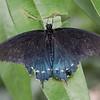 dsc_6902 inhabitants of Butterfly Gardens