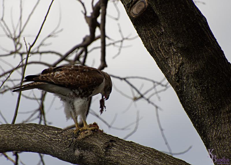 DSC_8641 the falcon_DxO