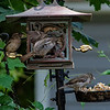 DSC_4074 backyard bird feeder