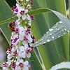 DSC_4403 foraging for nectar