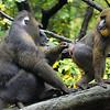 DSC_0808 baboons_DxO