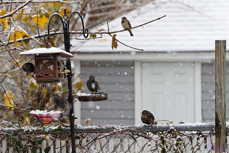 DSC_1350 backyard visitors_DxO