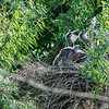 DSC_6793 heron's nest