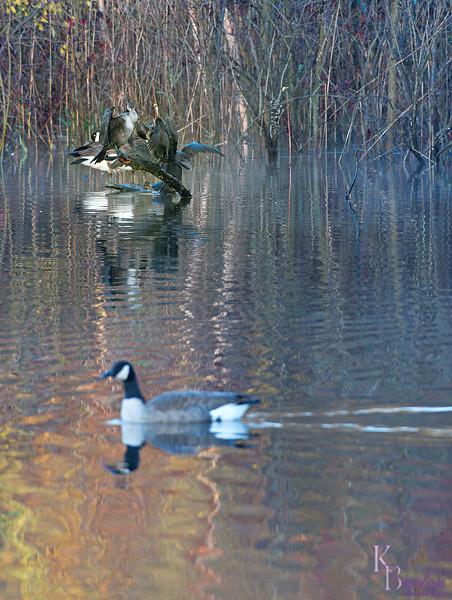 DSC_9519 Autumn at Wolfe's pond_DxO