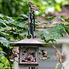 DSC_5465 backyard bird feeder