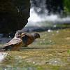 DSC_0469  taking a bath_DxO