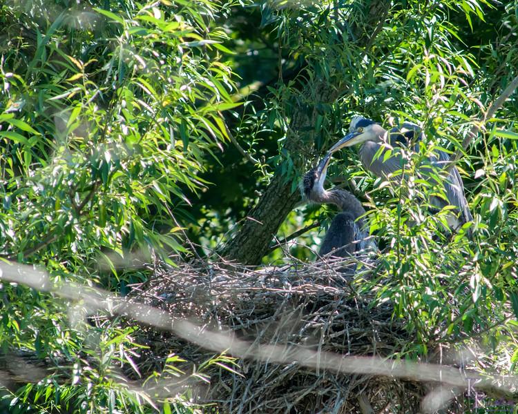 DSC_6886 heron's nest
