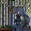 DSC_7713 backyard visitors_DxO