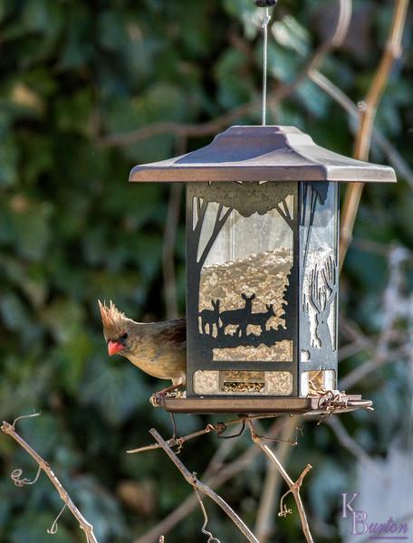 DSC_9845 backyard bird feeder
