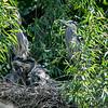 DSC_6908 heron's nest