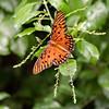 DSC_3068 scenes from butterfly gardens