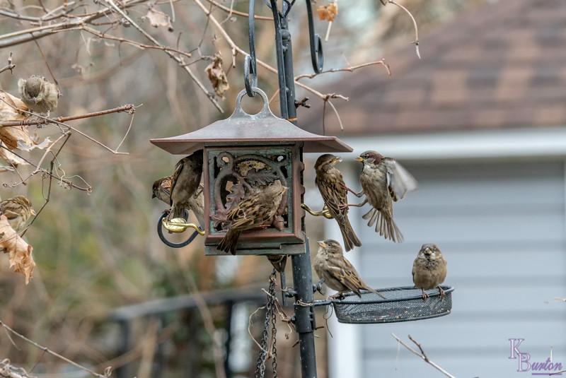 DSC_7547 backyard bird feeders
