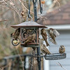 DSC_7547 backyard bird feeders
