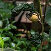 DSC_3352 scenes from Butterfly Gardens