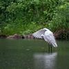 DSC_9285 rainy day at the pond