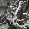 DSC_1371 baboon