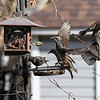 DSC_6646 backyard bird feeders