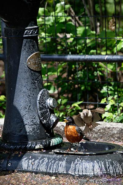 DSC_2529 bird bath_DxO