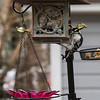 DSC_2303 woodpecker