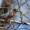 DSC_6744 backyard visitors_DxO