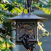 DSC_4203 backyard bird feeder