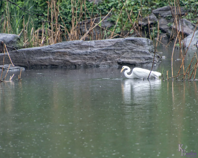 DSC_9149 hunting in the rain