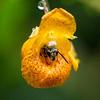 DSC_0412 pollenation in action