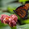 DSC_0765 scenes from the butterfly gardens