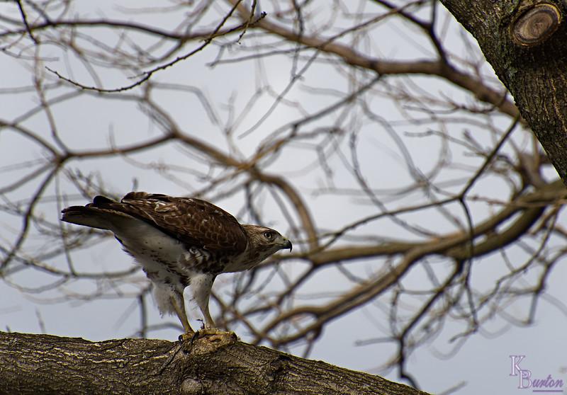 DSC_8626 the falcon_DxO