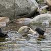 DSC_4327 bird bath