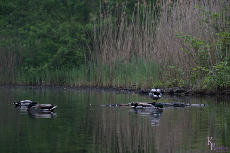 DSC_4325 scenes from Clove Lakes