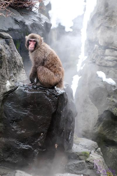 DSC_1909 monkey in the mist