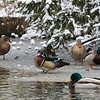 DSC_1121 winter scene at the zoo