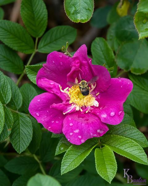DSC_5855 scenes from the Rose Garden