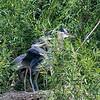 DSC_0282 heron's nest